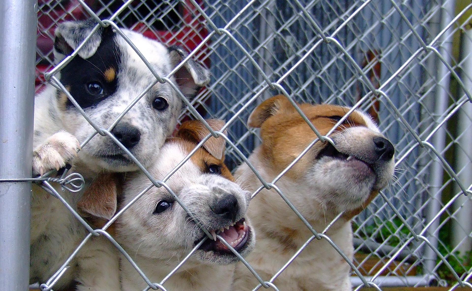 Pes z útulku vám dá bezmeznou lásku. Potřebuje však pevné vedení