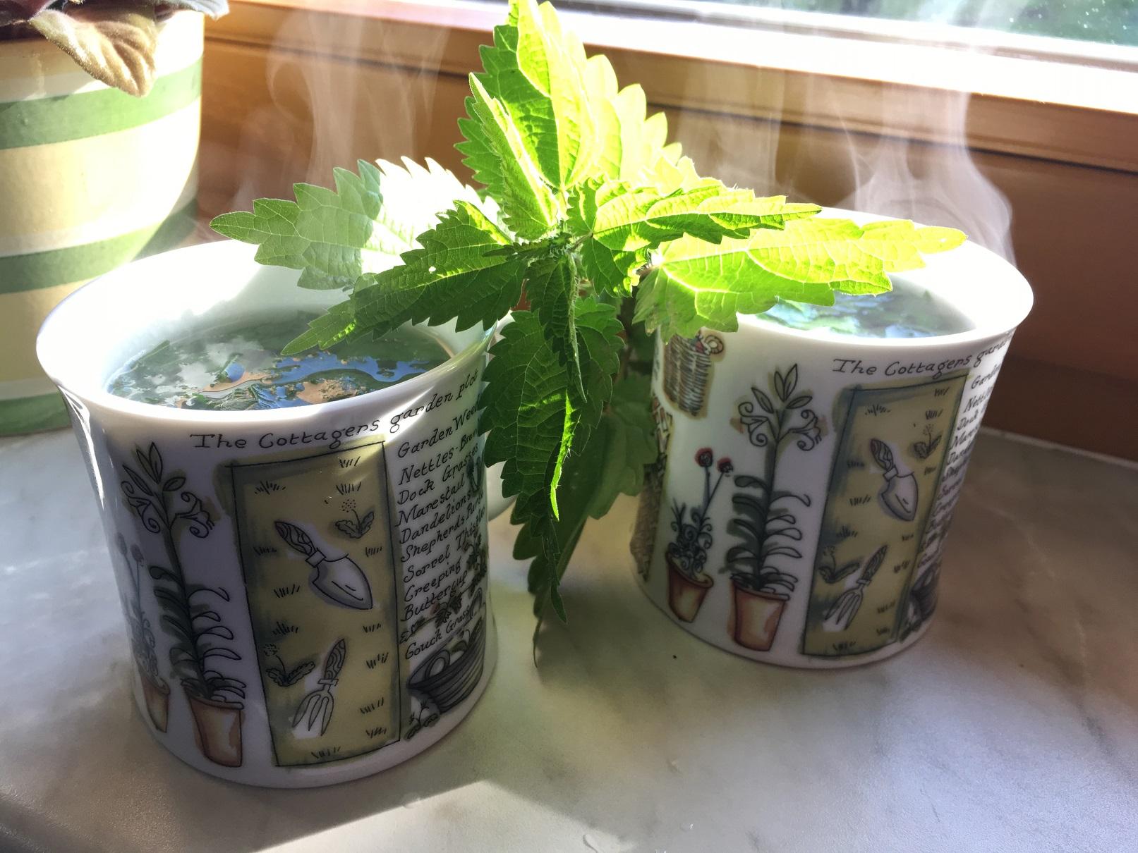 Kopřivový čaj na jarní detox