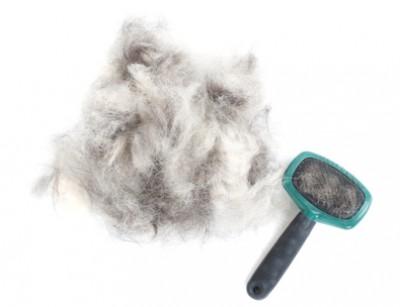 Jak odstranit chlupy psů a koček  Je to nekonečný boj s větrnými mlýny fd9a2f55f8