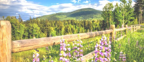nature-mountains-forest-road-fence-flowers-spring