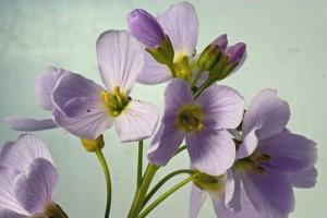 Luční byliny herbář