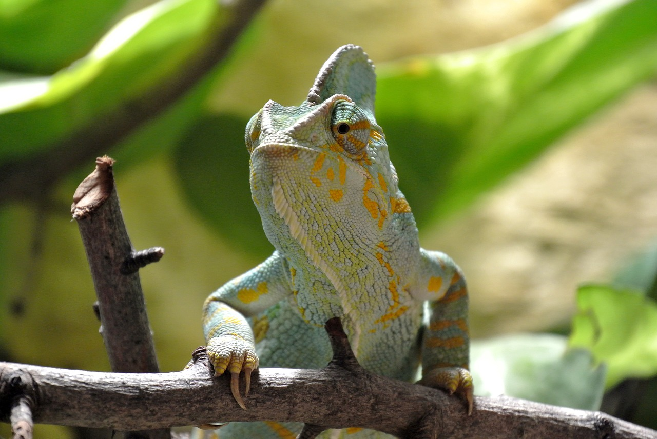 Terárium pro chameleona zařídíte raz dva. Pro chov chameleona je důležité  světlo i dobré větrání e8359b4fb4
