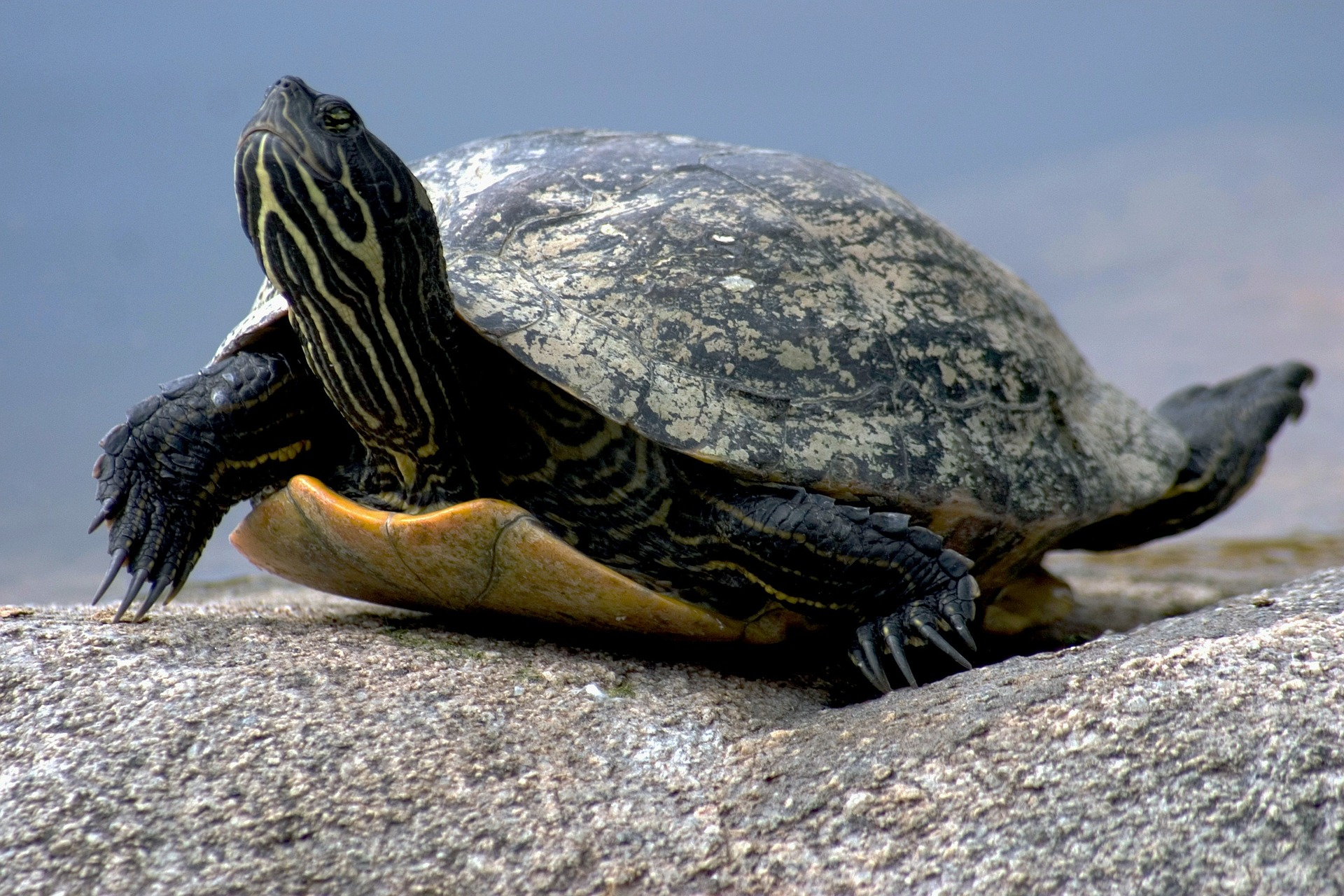 Chov želv může být někdy náročný. Želví řeč těla vám ale prozradí mnohé o  jejich potřebách 5f9632140a