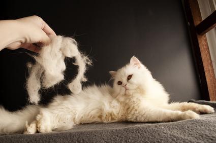 Zvířecí chlupy milovaných čtyřnohých mazlíčků se v domácnostech často  stávají tím největším nepřítelem. Pokud máte doma psa nebo kočku 3d56a78479