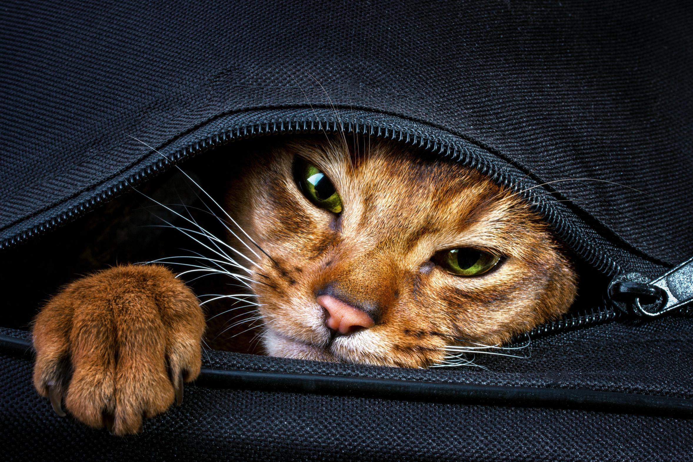 dc53c1b7323 Nemoci koček přenosné na člověka – prevence a léčba