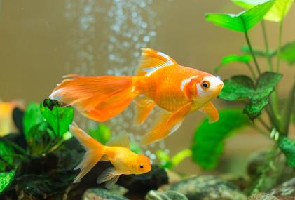 4964e676eb97 Údržba akvária – důležitá rutina