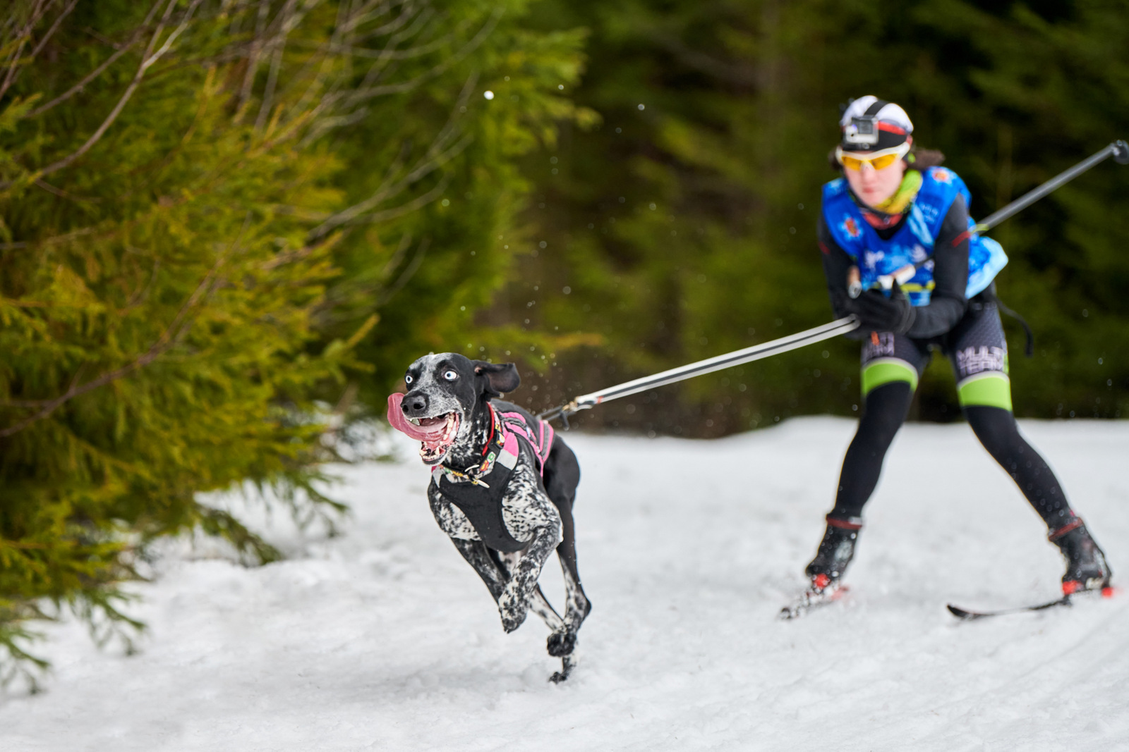 Na běžky můžete vyvést i svého psa