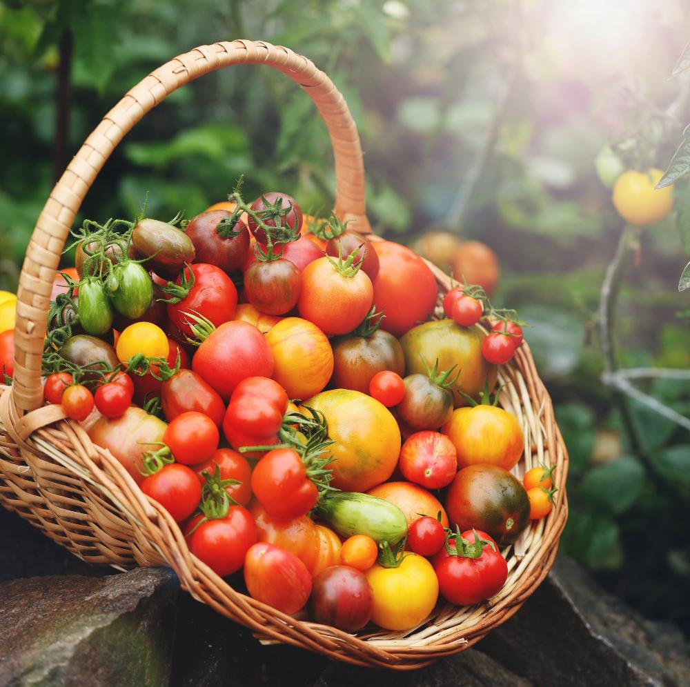 Permakulturní pěstování zajistí čistou a bohatou úrodu