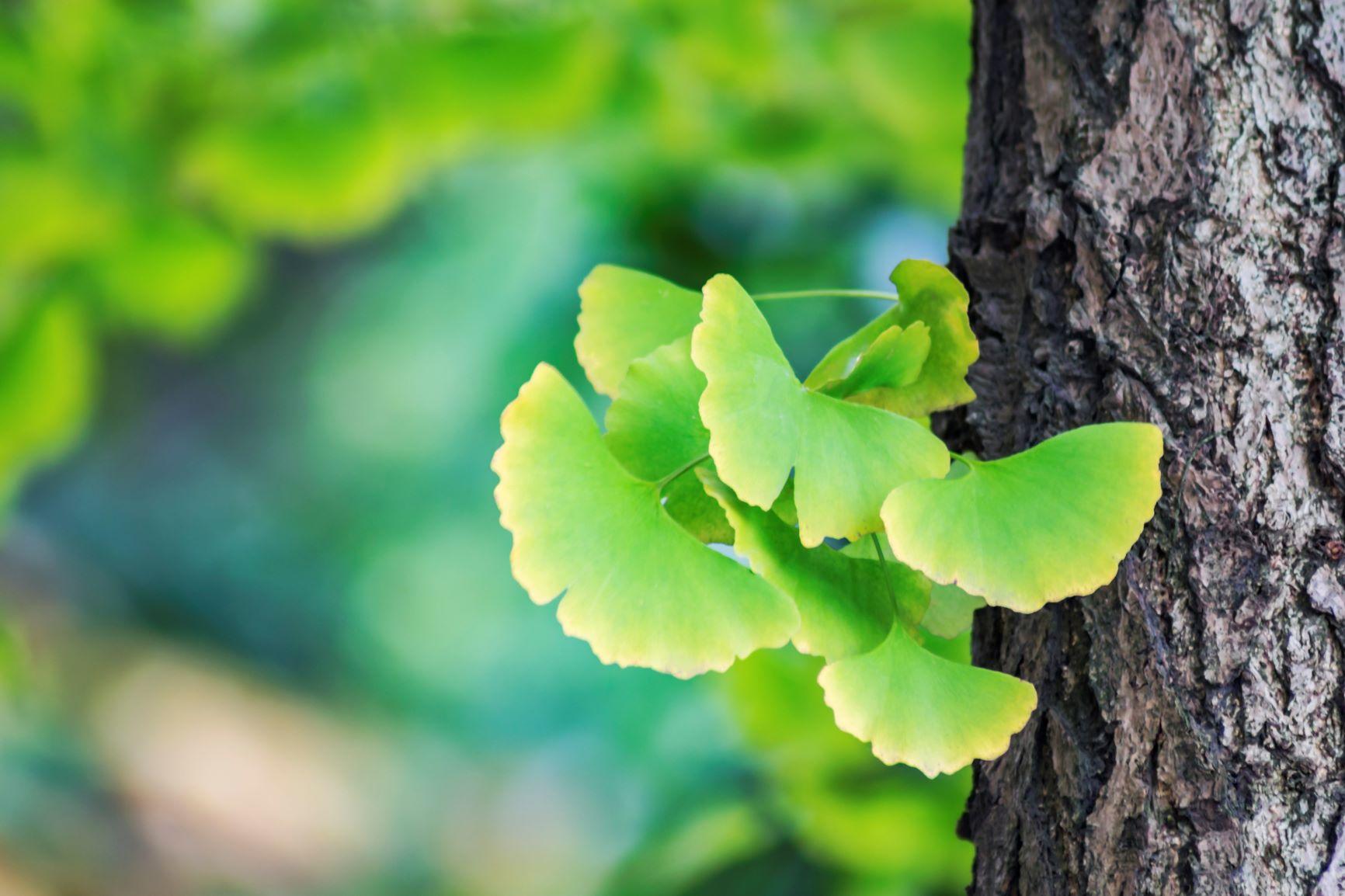 Některé byliny a rostliny mohou paměť vylepšit