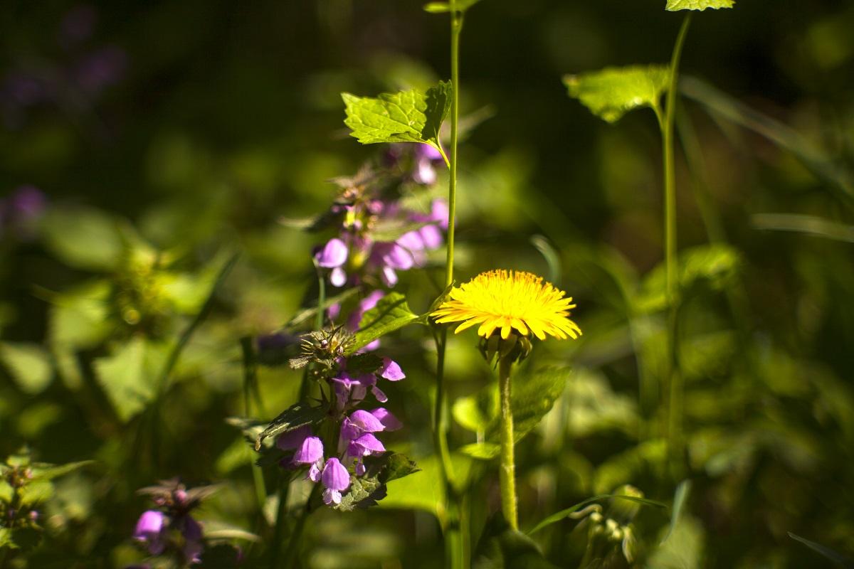 Jarní bylinky k jídlu nás nabijí energií