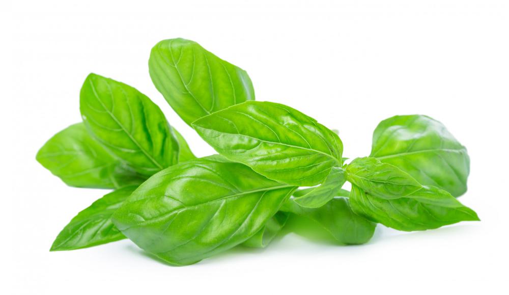 Bazalka není jen koření, ale i cenné přírodní léčivo