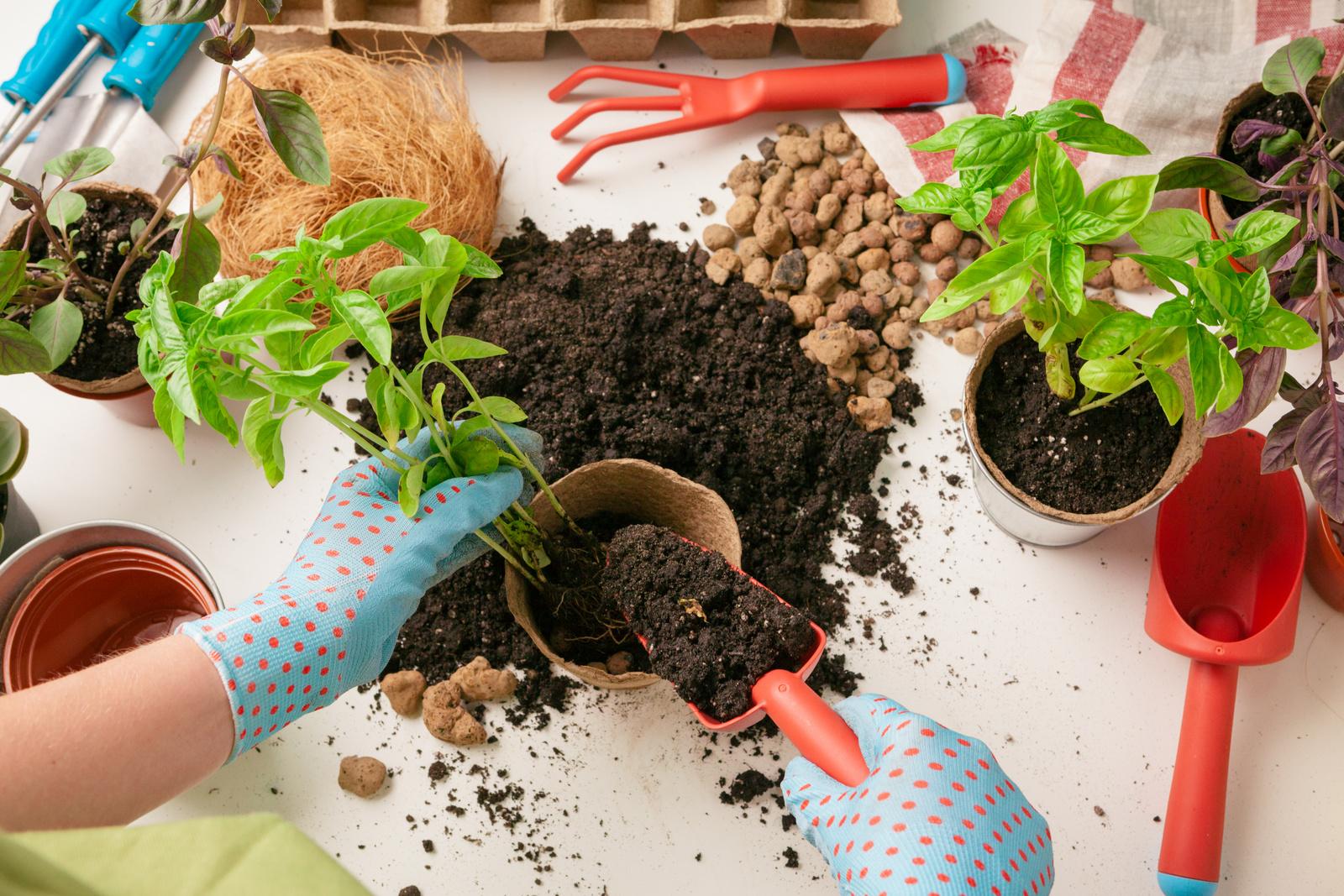 Zahradničení podle Luny je zajímavé